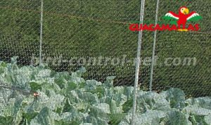 bird net providing protection to crops in garden